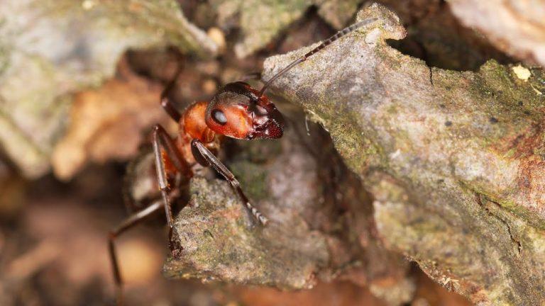Hmyz je fajnovy!!! aneb Ostravský hmyzí mobiliář