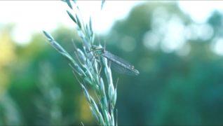 Hmyz je fajnOVY!!! aneb Druhy hmyzu v Ostravě